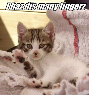 I haz dis many fingerz