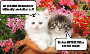 Surprise! Happy Birthday, Mamawalker!
