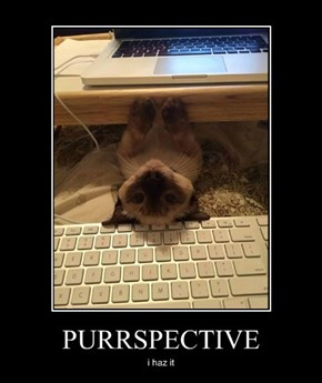 PURRSPECTIVE
