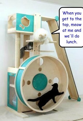 When you get to the top, meow at me and we'll do lunch.