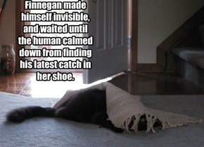 Finnegan made himself invisible, and waited until  the human calmed down from finding his latest catch in her shoe.