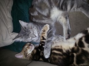 Celebrate National Hug Your Cat Day!