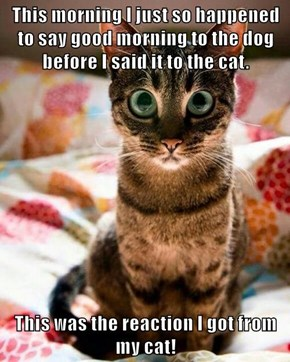 This morning I just so happened to say good morning to the dog before I said it to the cat.  This was the reaction I got from my cat!