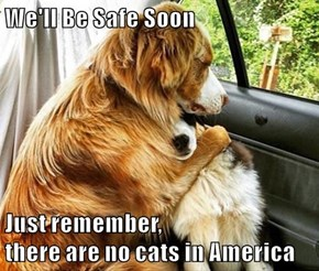 We'll Be Safe Soon  Just remember,                                     there are no cats in America
