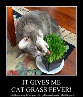 IT GIVES ME CAT GRASS FEVER!