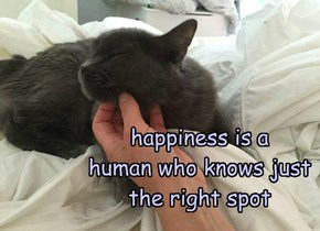 happiness is a  human who knows just the right spot