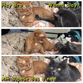 Hey Bro..         Wanna play?  Aih supose das a nao!