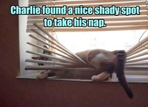 Indoor cat improvisation.