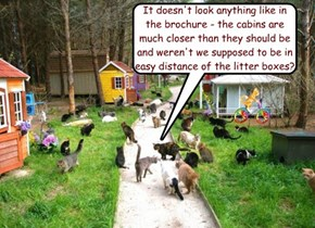 It doesn't look anything like in the brochure - the cabins are much closer than they should be and weren't we supposed to be in easy distance of the litter boxes?