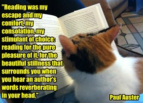 """""""Reading was my escape and my comfort, my consolation, my stimulant of choice: reading for the pure pleasure of it, for the beautiful stillness that surrounds you when you hear an author's words reverberating in your head."""""""