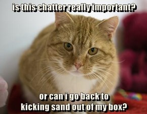 is this chatter really important?  or can i go back to                                          kicking sand out of my box?