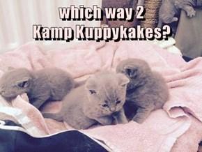 which way 2                                       Kamp Kuppykakes?