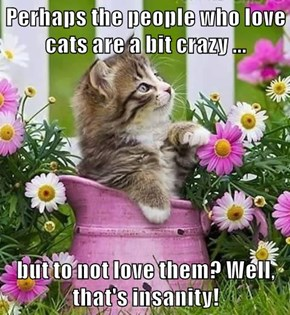 Perhaps the people who love cats are a bit crazy ...  but to not love them? Well, that's insanity!