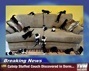 Breaking News - Catnip Stuffed Couch Discovered in Dorm...