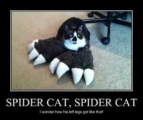 SPIDER CAT, SPIDER CAT