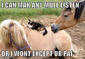I CAN MAK ANY MULE LISTEN  OR I WONT EXCEPT UR PAI