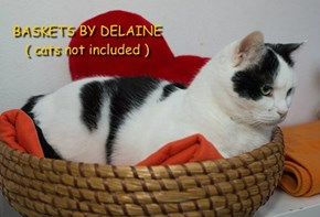 BASKETS BY DELAINE ( cats not included )
