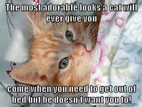 The most adorable looks a cat will ever give you  come when you need to get out of bed but he doesn't want you to!