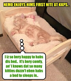 Nemo bery much appreshiates hims first nite in teh bed dat he wer assigned at Kuppykakes Preppy Skool.. Dis iz teh first bed dat he eber had for hims own self..