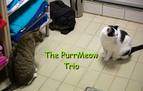 The PurrMeow Trio