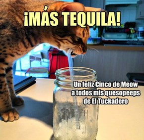 Happy Cinco de Meow to all my cheezyfriends