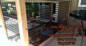Kitty Buddy Sanctuary