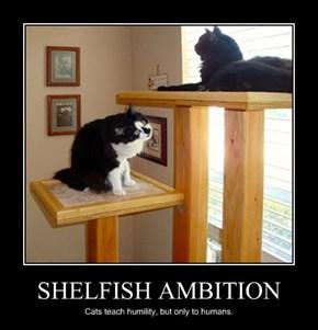 SHELFISH AMBITION