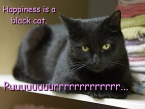 Happiness is a black cat.