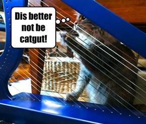 Oh, the felinity!
