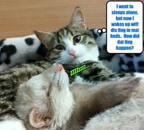 Kittie finks he may habs entered teh Twilight Zone!