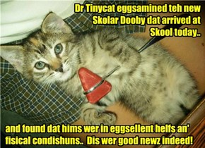Dr Tinycat habs good news for Dooby who trabeled an astounding elebenty hundred miles to get to Kuppykakes Preppy Skool..