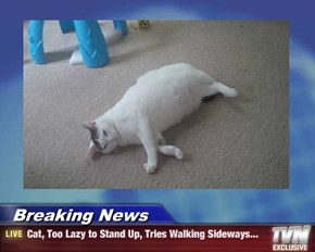 Breaking News - Cat, Too Lazy to Stand Up, Tries Walking Sideways...