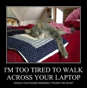 I'M TOO TIRED TO WALK ACROSS YOUR LAPTOP