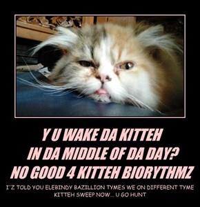 Y U WAKE DA KITTEH  IN DA MIDDLE OF DA DAY? NO GOOD 4 KITTEH BIORYTHMZ