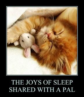 THE JOYS OF SLEEP SHARED WITH A PAL