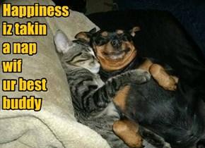 Happiness  iz takin  a nap wif ur best buddy