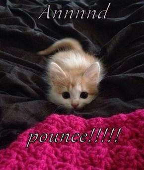 Annnnd  pounce!!!!!