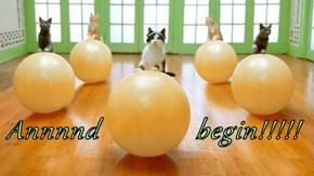 Annnnd              begin!!!!!