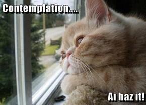 Contemplation....  Ai haz it!