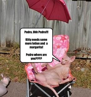 Senorita Kitty, has little patience!
