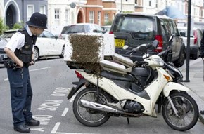 Bees Mistake a Pizza Delivery Guy's Bike for Their Hive. The Bees Own This Pizza Now.