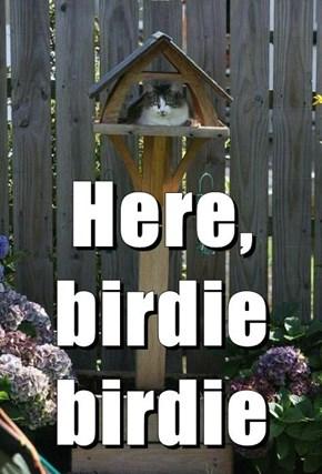 Here, birdie birdie