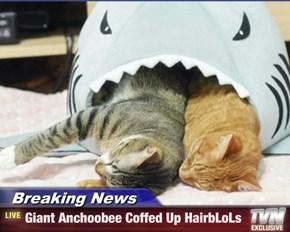 Breaking News - Giant Anchoobee Coffed Up HairbLoLs