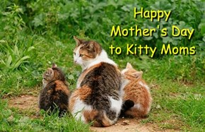 Happy Mother's Day to Kitty Moms