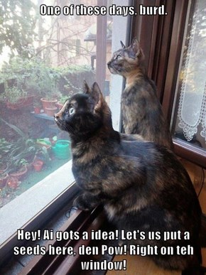 One of these days, burd.    Hey! Ai gots a idea! Let's us put a seeds here, den Pow! Right on teh window!