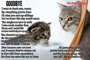 Goodbye, mama,