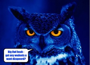 Big Owl heah - got eny wodents u want dizapeerd?