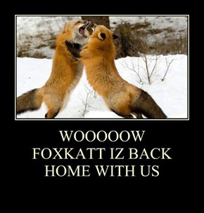 WOOOOOW FOXKATT IZ BACK HOME WITH US