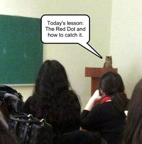 Today's lesson: The Red Dot and how to catch it.