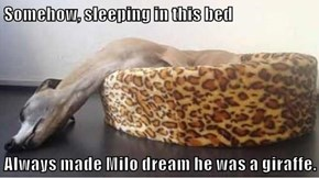 Somehow, sleeping in this bed  Always made Milo dream he was a giraffe.